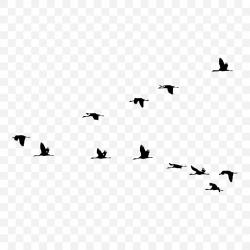 Naklejki Ptaki